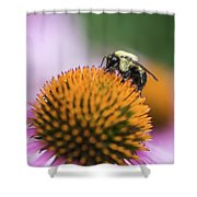 Busy Bee On Cone Flower Shower Curtain