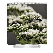 Busy Bee On White Shower Curtain