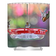 Busy Day At The Feeder Shower Curtain