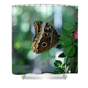 Buterfly 4 Shower Curtain