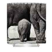 Butt Butt Butt Shower Curtain by Joan Carroll