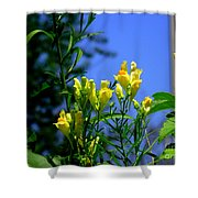 Butter And Egg Wildflower Shower Curtain