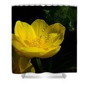 Buttercup And Dew Drops Shower Curtain