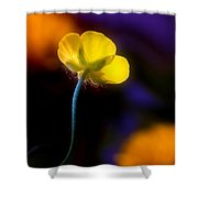 Buttercup Baby... Shower Curtain