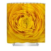 Buttercup Macro Shower Curtain