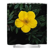 Buttercup Shower Curtain