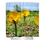 Buttercups Shower Curtain