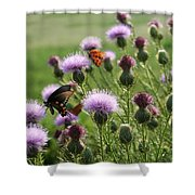 Butterflies And Bull Thistle Wildflowers Shower Curtain