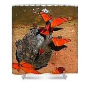 Butterflies And Turtle Shower Curtain