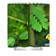 Butterflies Gentle Courtship 4 Panel Composite Shower Curtain
