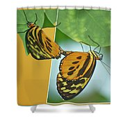 Butterflies Mating Out Of Bounds Shower Curtain