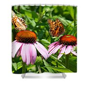 Butterflies On Echinacea Flowers Shower Curtain