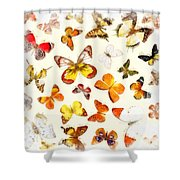 Butterflies Square Shower Curtain