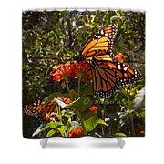 Butterflies Three Shower Curtain