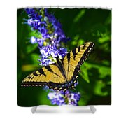 Butterflly Bush And The Swallowtail Shower Curtain