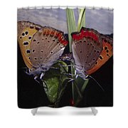 Butterfly 001 Shower Curtain