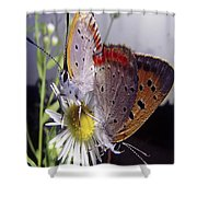 Butterfly 002 Shower Curtain