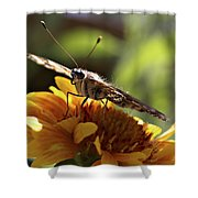 Butterfly 004 Shower Curtain