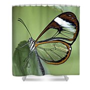 Butterfly 005 Shower Curtain