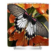 Butterfly 006 Shower Curtain