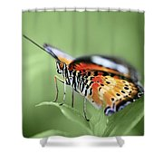 Butterfly 008 Shower Curtain