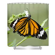 Butterfly 009 Shower Curtain
