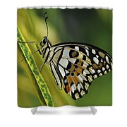 Butterfly 010 Shower Curtain