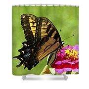 Butterfly 011 Shower Curtain