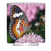 Butterfly 012 Shower Curtain