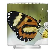 Butterfly 013 Shower Curtain