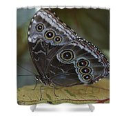 Butterfly 015 Shower Curtain