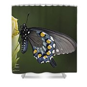 Butterfly 016 Shower Curtain