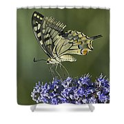 Butterfly 020 Shower Curtain