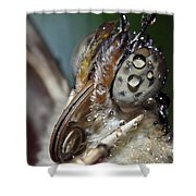 Butterfly 021 Shower Curtain