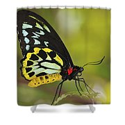 Butterfly 022 Shower Curtain