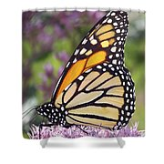 Butterfly 024 Shower Curtain