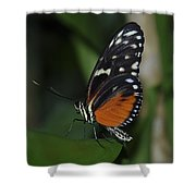 Butterfly 025 Shower Curtain