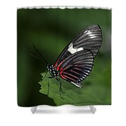 Butterfly 027 Shower Curtain