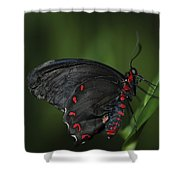 Butterfly 028 Shower Curtain