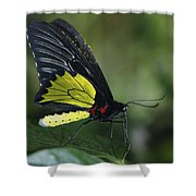 Butterfly 029 Shower Curtain