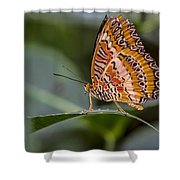 Butterfly Resplendent Shower Curtain