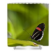 Butterfly 14 Shower Curtain