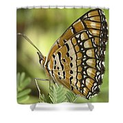 Butterfly 18 Shower Curtain