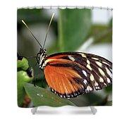 Key West Butterfly 2 Shower Curtain