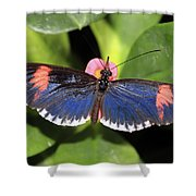 Key West Butterfly 3 Shower Curtain