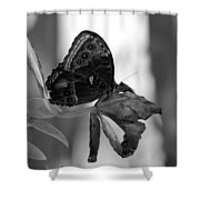 Butterfly 4 Shower Curtain
