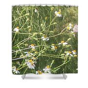 Butterfly 51 Shower Curtain