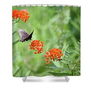 Butterfly A L'orange Shower Curtain