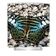 Butterfly Amongst Stones Shower Curtain