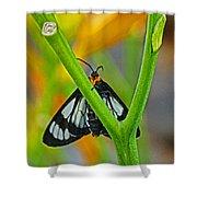 Butterfly An3597-13 Shower Curtain
